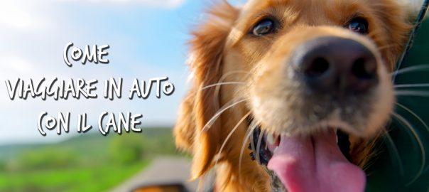 Come viaggiare in auto con il cane