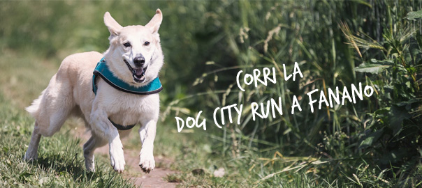 dog city run