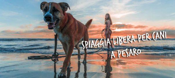 pesaro spiaggia libera per cani