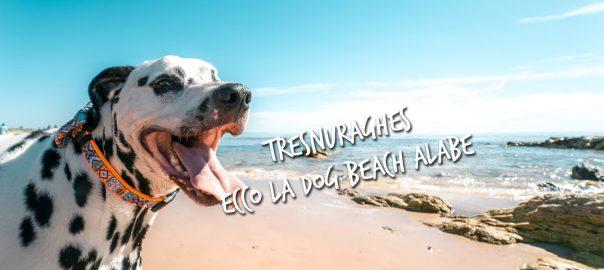 Dog Beach Alabe